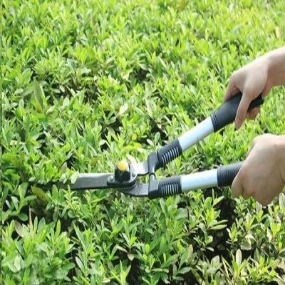 园林绿化养护、修剪